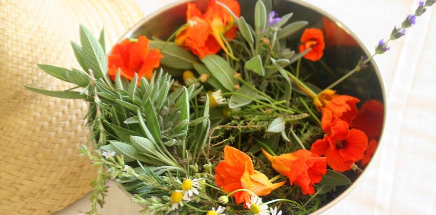 tisanes-feuilles-et-fleurs4