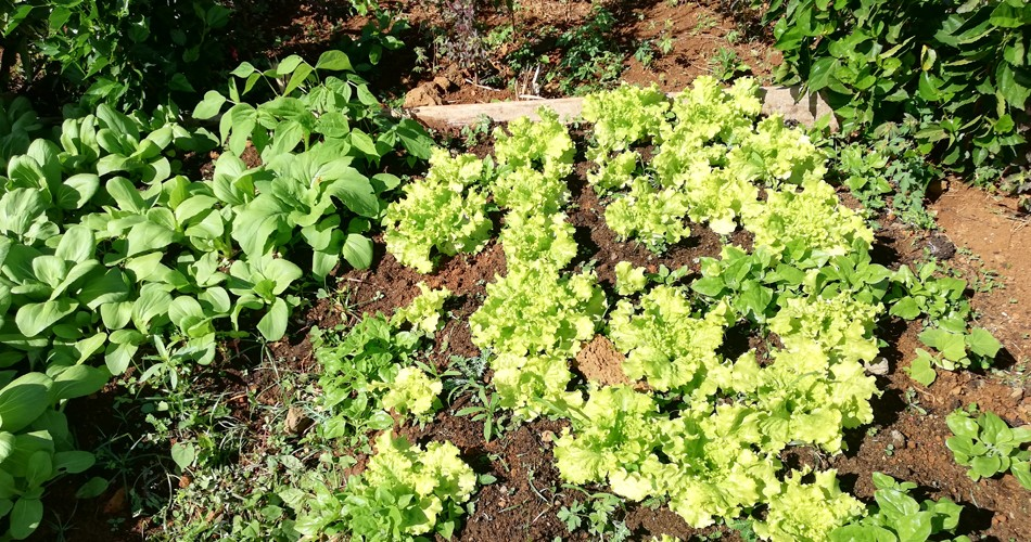 Jardin-bio-ile-maurice-feuillesetfleurs001