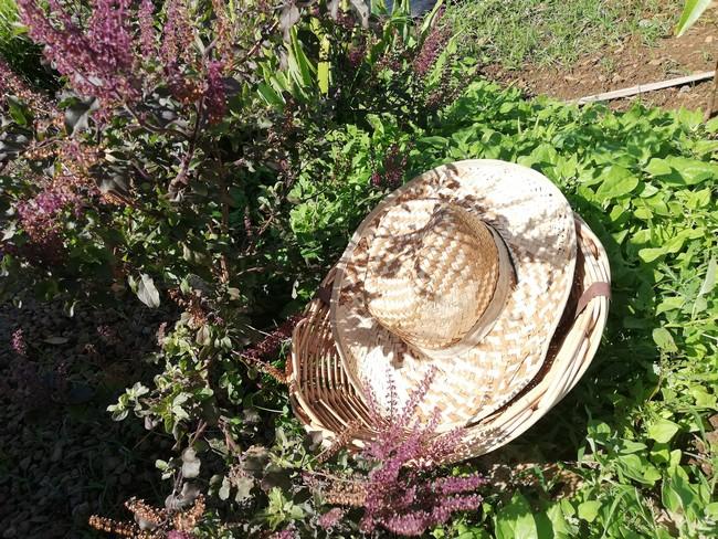 tisanes-artisanales-ile-maurice-feuillesetfleurs011