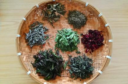 tisanes-artisanales-ile-maurice-feuillesetfleurs019
